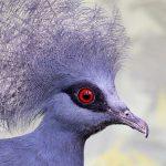 ציפור עם עיניים אדומות. צילום: Radomír Šalda